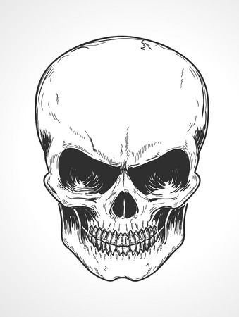 lowbrow: illustration of detailed human skull