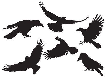 corbeau: collection d'illustration de corneille silhouette dans des positions diff�rentes de vol