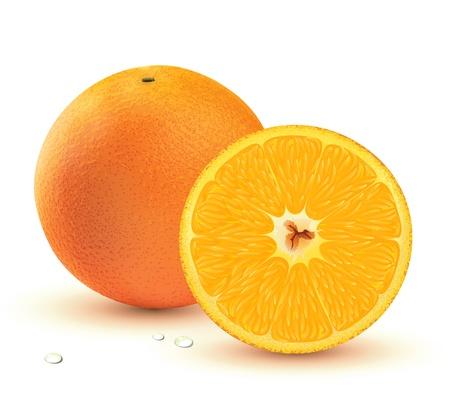 Vector illustration of a Fresh juicy oranges isolated on white background. Vector