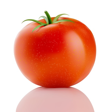 truss: Vector illustration of a fresh ripe red truss tomato isolated on white