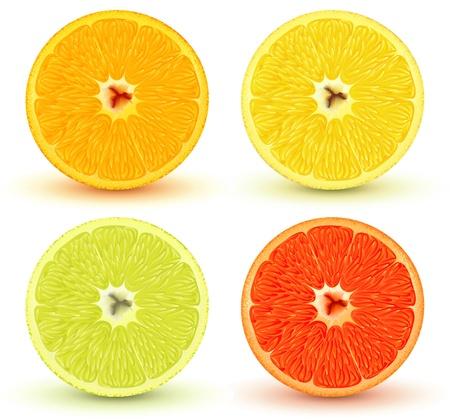 rinds: Vector illustration of Slices of citrus fruits: orange, red grapefruit, lemon and lime. Great for making patterns