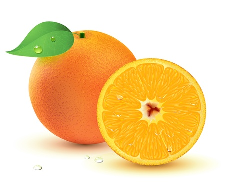 orange slice: Vector illustration of a Fresh juicy oranges isolated on white background. Illustration