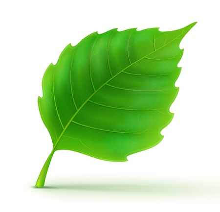 leaf logo: illustration of cool green detailed leaf Illustration