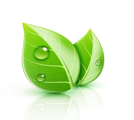 dews: Vector illustration of ecology concept icon with glossy green leaves