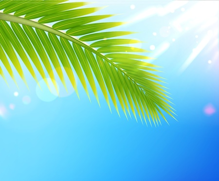 Vector illustration of tropical summer background palm tree leaf Vector