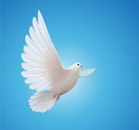 pigeons: belle colombe blanche brillante volant tr�s haut dans un ciel bleu