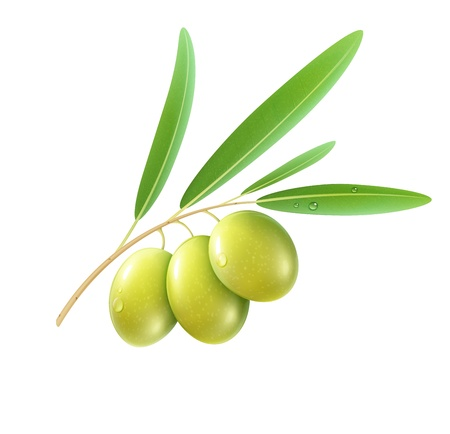 illustration of detailed green olives with leaves on white background   Illustration