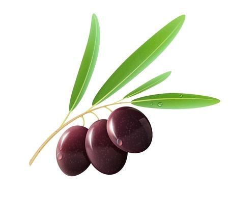 leaf vegetable: Vector illustration of detailed black olives with leaves on white background.  Illustration