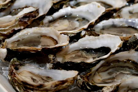 oysters in ice ready for use. close-up Stock Photo