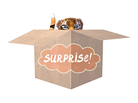 hide and seek: Beautiful little tiger in a box with Surprise Word tag. Isolated on white.