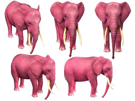 pink elephant: Pink elephant. Image isolated on white background