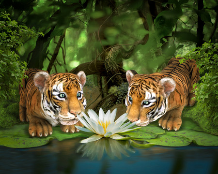tiger lily: Two tigers sniffing lotus. Illustration.
