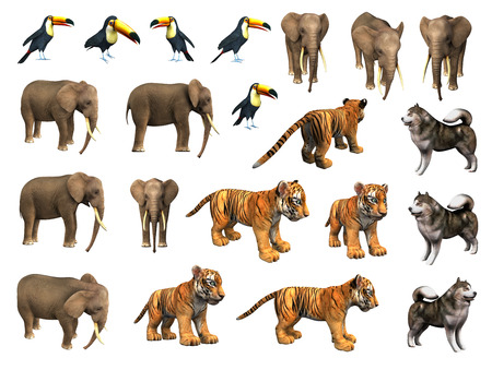 Tiger cub: Animales de zool�gico colecci�n - elefante, cachorro de tigre, tuc�n, perro esquimal Foto de archivo