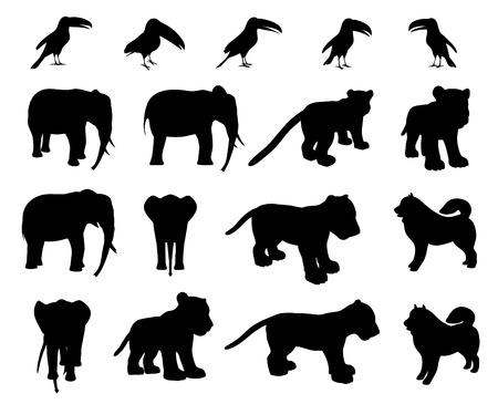 tigre cachorro: Animales de zoológico colección - elefante, cachorro de tigre, tucán, perro esquimal Vectores