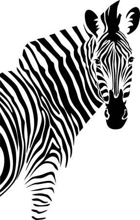 zebra pattern: Zebra. Isolated  on white background Illustration