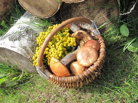 log basket: basket with mushrooms Stock Photo