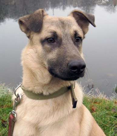 nursling: Portrait of a seated dog