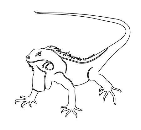 Iguana. Coloring book vector illustration