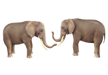 Two elephants. 3D image isolated on white background Фото со стока - 97845124