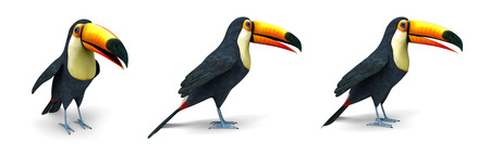 Toucan tropical bird - 3d image isolated on white background Stock Photo