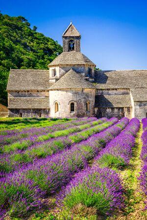 Abadía de Senanque, pintoresco campo de lavanda de Provenza en Francia.