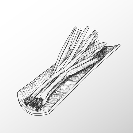 Vector drawing of a bunch of keys with roof tile. Scallions.