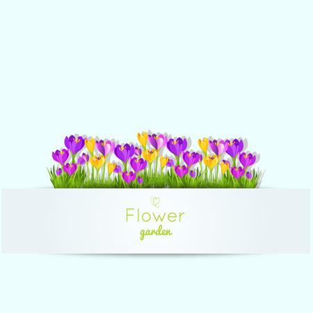 Spring illustration with crocus garden flowers.