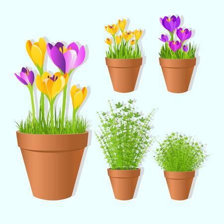 tots: Set of vector spring garden flowers in tots.