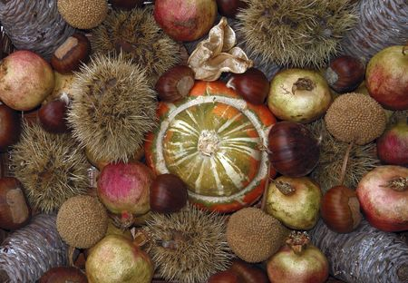 dried gourd: Autumn still life - colors and fruits of Fall season Stock Photo