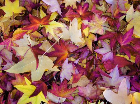 Fall carpet of brightly colored tree leaves on the ground