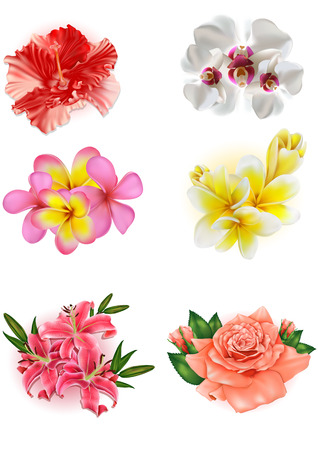 lily flowers set: set of beautiful flowers: lily, rose, hibiscus, orchid, plumeria Illustration