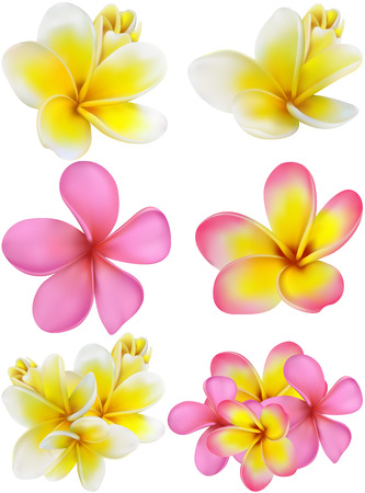 set of yellow and pink plumerias , may be used for a Woman\\ Illustration