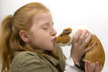 little red head girl is kissing with a guinea pig Stock Photo