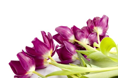 Purple tulips Stock Photo - 4302520