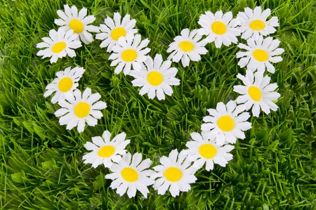 heart of daisies on the grass Stock Photo - 4350308