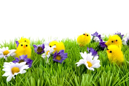 grass with flowers and baby chicken photo