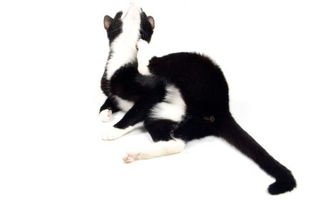 kitten is scratching herself isolated on white Stock Photo