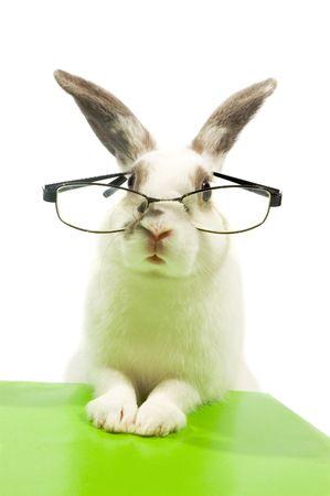 lapin blanc porter des lunettes-isolées sur blanc Banque d'images