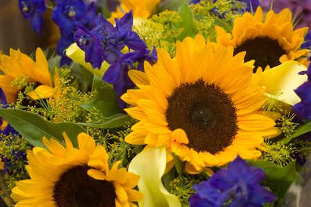 ultra colorful abundant summer bouquet with Sunflowers Stock Photo - 6014910