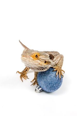 Bearded Dragon (pogona vitticeps) with christmas balls isolated on a white background Stock Photo