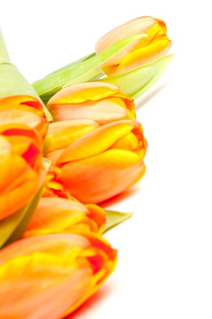 bunch of yellow orange tulips isolated on white Stock Photo