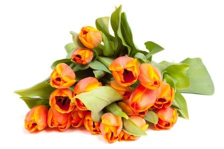 Yellow orange tulips isolated on white background  Stock Photo