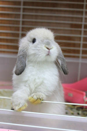 rabbit baby photo