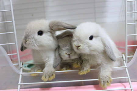 three little rabbit photo