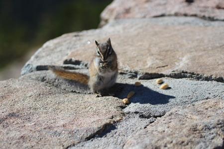 ardilla: Ardilla en el almuerzo Foto de archivo