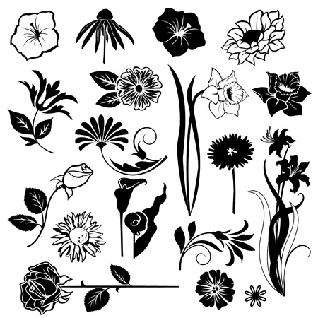 Set  of flower design elements isolated on White background