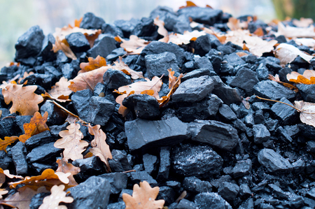 yellow oak leaves in a pile of black coal in the fall