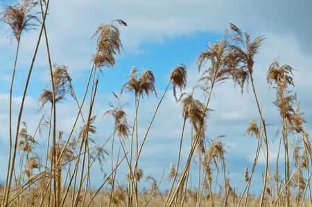 Yellow dry grass and blue sky spring summer Stock Photo
