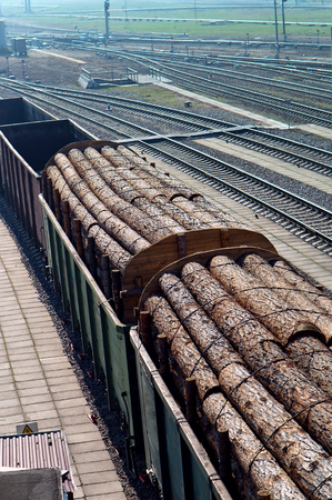 logging railroads: wagons loaded with logs transportation of logs by train