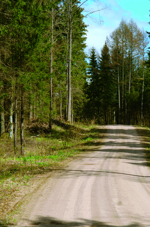 unpaved forest road, a wide track in the woods tall pine trees